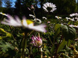 Cursus fotograferen voor kinderen, foto van bloemen gemaakt door kind, workshop gegeven door Sandra Stokmans fotografie